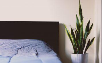 כדאי להכיר: מי הוא פשפש המיטה ואיך תיפטרו ממנו?